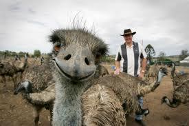 Emu Photobomb.