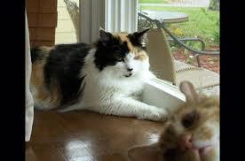 Cat Photobomb.