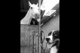 Horse Photobomb.