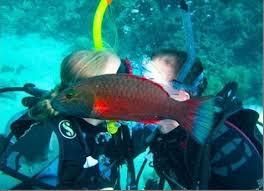Fish Photobomb.
