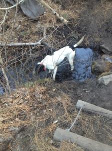 Cash enjoying the stream!