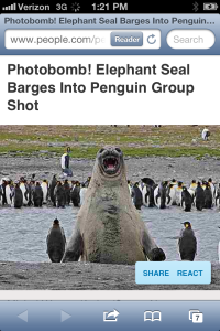 Elephant Seal Photobomb.