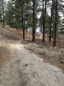 It's lonesome out here... on Lonesome Trail...