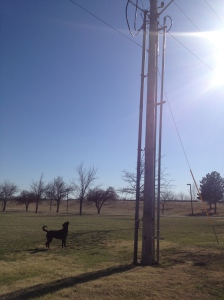 She likes to hunt squirrels on our walks/ runs. This one just so happened to run up a telephone pole.